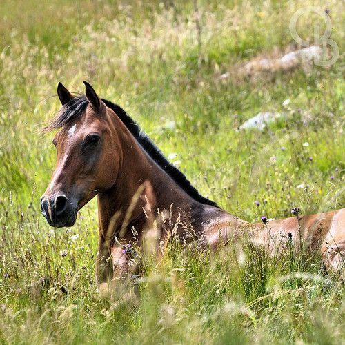 Andalusier Pferde Bilder Für Whatsapp - Andalusier Pferde Bilder Für Whatsapp