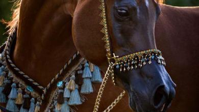 Ausdruckbilder Pferde Für Facebook 390x220 - Ausdruckbilder Pferde Für Facebook