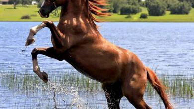 Ausmalbilder Pferde Für Facebook 390x220 - Ausmalbilder Pferde Für Facebook