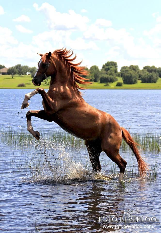Ausmalbilder Pferde Für Facebook - Ausmalbilder Pferde Für Facebook