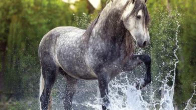 Ausmalbilder Pferde Für Whatsapp 390x220 - Ausmalbilder Pferde Für Whatsapp