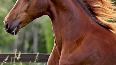 Bayerns Pferde Für Facebook 390x220 - Bayerns Pferde Für Facebook
