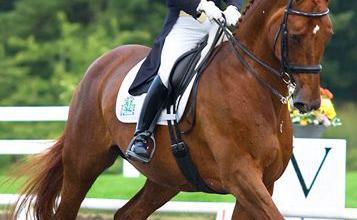 Belgier Pferd Kaufen Für Facebook 357x220 - Belgier Pferd Kaufen Für Facebook