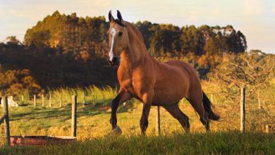 Berühmte Pferde Gemälde 390x220 - Berühmte Pferde Gemälde