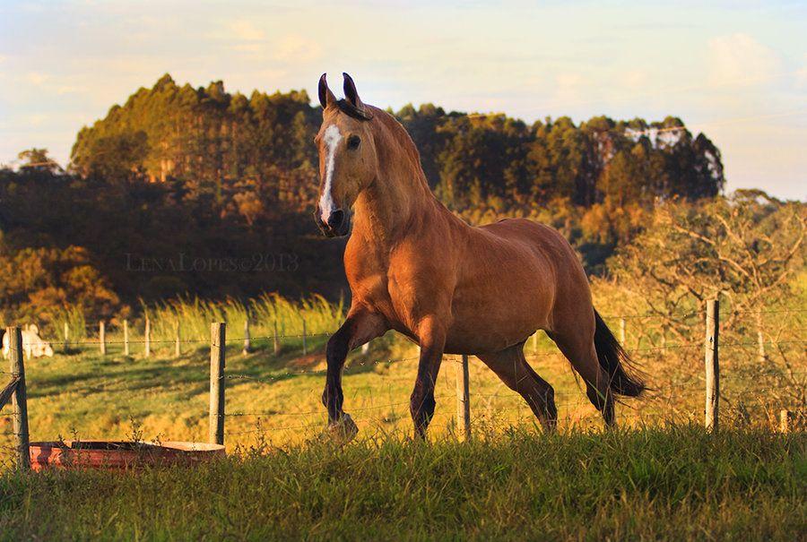 Berühmte Pferde Gemälde - Berühmte Pferde Gemälde