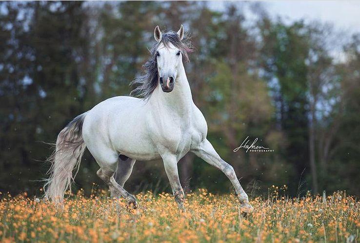 Bild Lachendes Pferd Kostenlos Herunterladen - Bild Lachendes Pferd Kostenlos Herunterladen