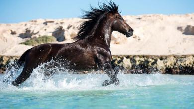 Bild Pferd Ausmalen Für Whatsapp 390x220 - Bild Pferd Ausmalen Für Whatsapp