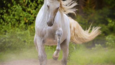 Bild Pferd Comic Für Whatsapp 390x220 - Bild Pferd Comic Für Whatsapp