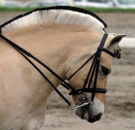 Bild Pferd Comic - Bild Pferd Comic