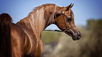 Bilder Über Pferde Für Whatsapp 390x220 - Bilder Über Pferde Für Whatsapp