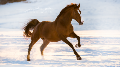 Bilder Geburtstag Pferd Für Facebook 390x220 - Bilder Geburtstag Pferd Für Facebook