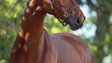 Bilder Haflinger Pferde Für Facebook 390x220 - Bilder Haflinger Pferde Für Facebook
