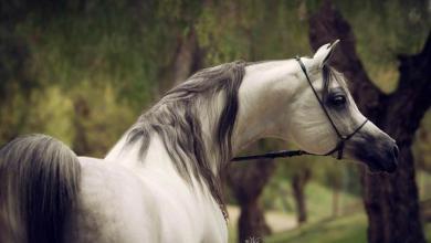 Bilder Von Einem Pferd Für Facebook 390x220 - Bilder Von Einem Pferd Für Facebook