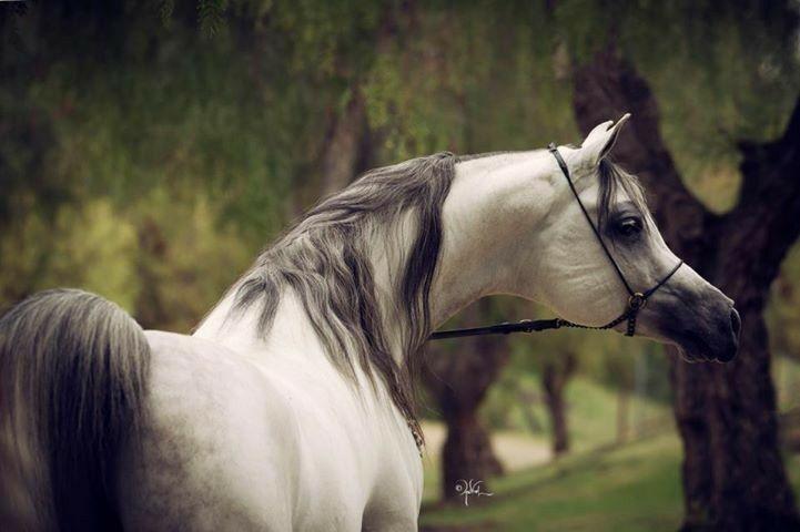 Bilder Von Einem Pferd Für Facebook - Bilder Von Einem Pferd Für Facebook
