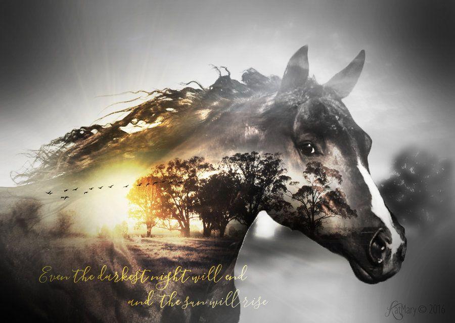 Bilder Von Einem Pferd Kostenlos Herunterladen - Bilder Von Einem Pferd Kostenlos Herunterladen