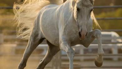 Bilder Von Pferden Kostenlos Downloaden 390x220 - Bilder Von Pferden Kostenlos Downloaden