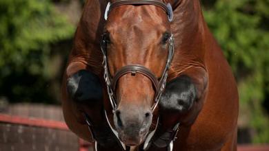 Bilder Von Pferden Kostenlos Herunterladen 390x220 - Bilder Von Pferden Kostenlos Herunterladen