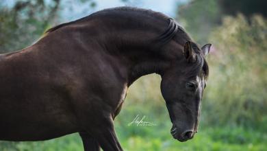 Bilder Von Pferden Und Ponys 390x220 - Bilder Von Pferden Und Ponys