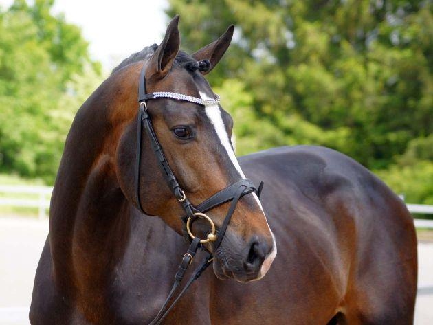 Bilder Von Pferden Und Ponys Kostenlos Herunterladen - Bilder Von Pferden Und Ponys Kostenlos Herunterladen
