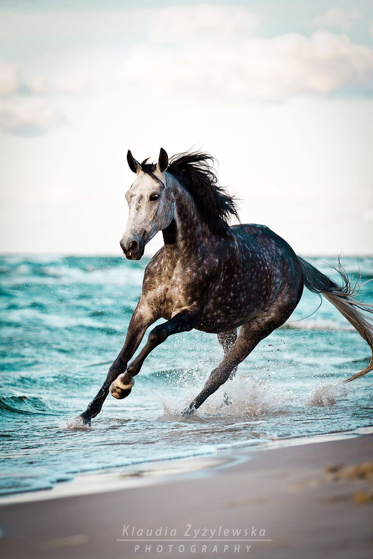 Bilder Von Pferden Zum Ausdrucken Kostenlos Herunterladen Bilder Und Spruche Fur Whatsapp Und Facebook Kostenlos