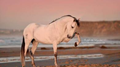 Bilder Von Pferderassen Für Whatsapp 390x220 - Bilder Von Pferderassen Für Whatsapp
