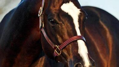 Bilder Von Schönen Pferden Für Facebook 390x220 - Bilder Von Schönen Pferden Für Facebook