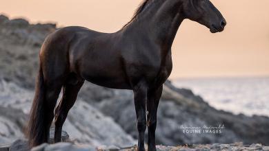 Bildschirmhintergrund Pferde Für Whatsapp 390x220 - Bildschirmhintergrund Pferde Für Whatsapp