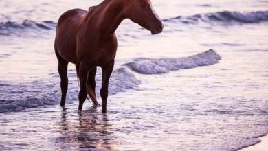 Bildschirmhintergrund Pferde Kostenlos Herunterladen 390x220 - Bildschirmhintergrund Pferde Kostenlos Herunterladen