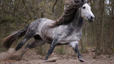 Blaues Pferd Kostenlos Downloaden 390x220 - Blaues Pferd Kostenlos Downloaden