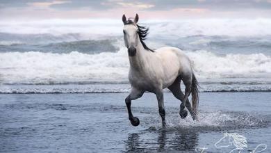 Bunte Pferde Kaufen Für Whatsapp 390x220 - Bunte Pferde Kaufen Für Whatsapp