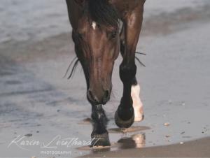 Bunte Pferde Kaufen Kostenlos Herunterladen 300x226 - Bunte Pferde Kaufen Kostenlos Herunterladen