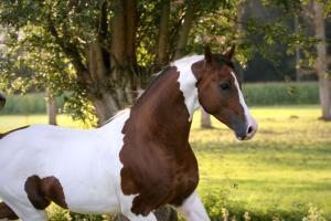 Camargue Pferde Bilder Für Facebook 300x200 - Camargue Pferde Bilder Für Facebook