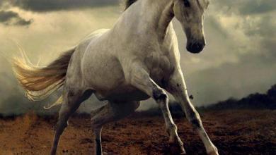 Clydesdale Pferde Kaufen Kostenlos Herunterladen 390x220 - Clydesdale Pferde Kaufen Kostenlos Herunterladen