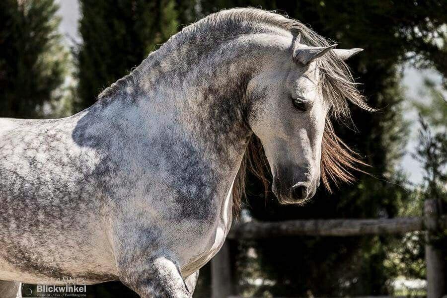 Coole Pferde Bilder Bilder Und Sprüche Für Whatsapp Und