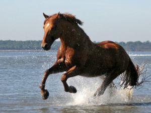 Das Pferd 300x225 - Das Pferd