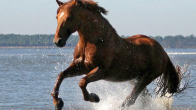 Das Pferd 390x220 - Das Pferd