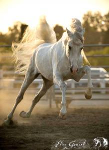 Das Pferd Kostenlos Herunterladen 219x300 - Das Pferd Kostenlos Herunterladen