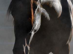 Desktop Hintergrund Kostenlos Pferde Für Whatsapp 298x220 - Desktop Hintergrund Kostenlos Pferde Für Whatsapp