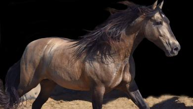 Desktop Hintergrund Pferde Kostenlos Herunterladen 390x220 - Desktop Hintergrund Pferde Kostenlos Herunterladen
