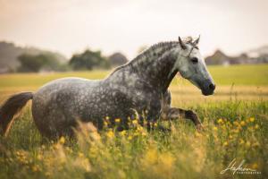 Desktop Hintergrundbilder Pferde 300x200 - Desktop Hintergrundbilder Pferde