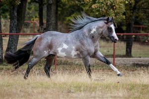 Desktop Hintergrundbilder Pferde Kostenlos Herunterladen 300x200 - Desktop Hintergrundbilder Pferde Kostenlos Herunterladen