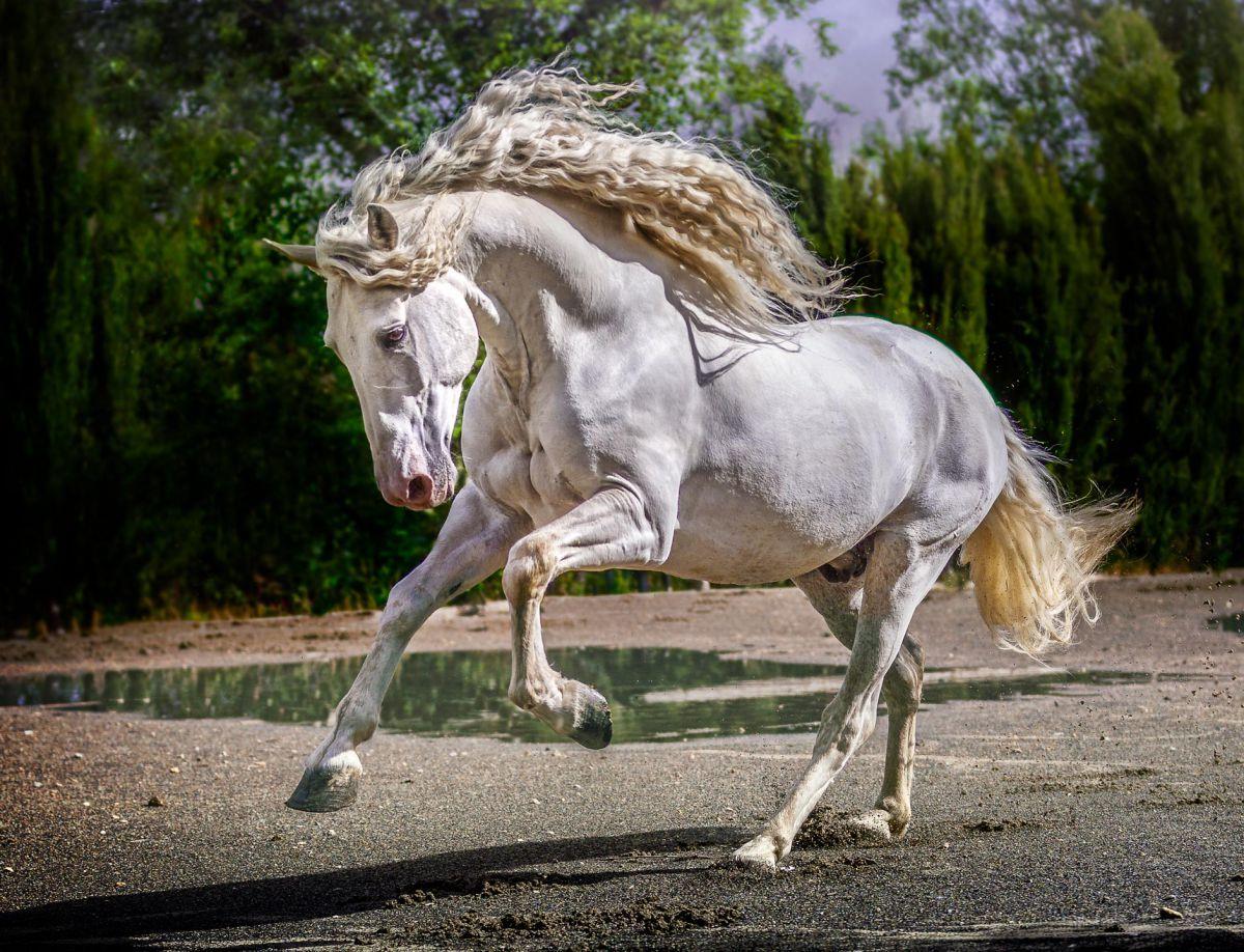 Die Pferde Bilder Und Sprüche Für Whatsapp Und Facebook
