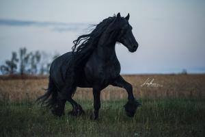 Die Schönsten Pferdebilder 300x200 - Die Schönsten Pferdebilder