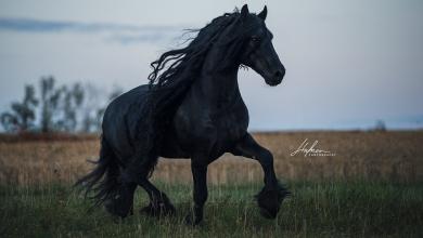 Die Schönsten Pferdebilder 390x220 - Die Schönsten Pferdebilder