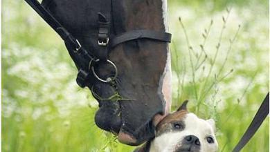 Die Schönsten Pferdebilder Für Facebook 390x220 - Die Schönsten Pferdebilder Für Facebook