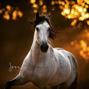 Echte Pferde Bilder Für Facebook 300x300 - Echte Pferde Bilder Für Facebook