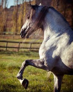 Echte Pferde Kaufen 240x300 - Echte Pferde Kaufen