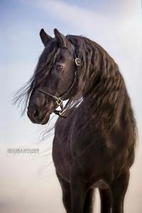 Eigenes Pferd 200x300 - Eigenes Pferd