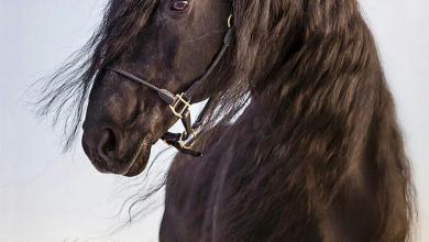 Eigenes Pferd 390x220 - Eigenes Pferd