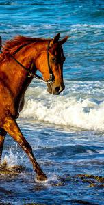 Eigenes Pferd Für Facebook 152x300 - Eigenes Pferd Für Facebook